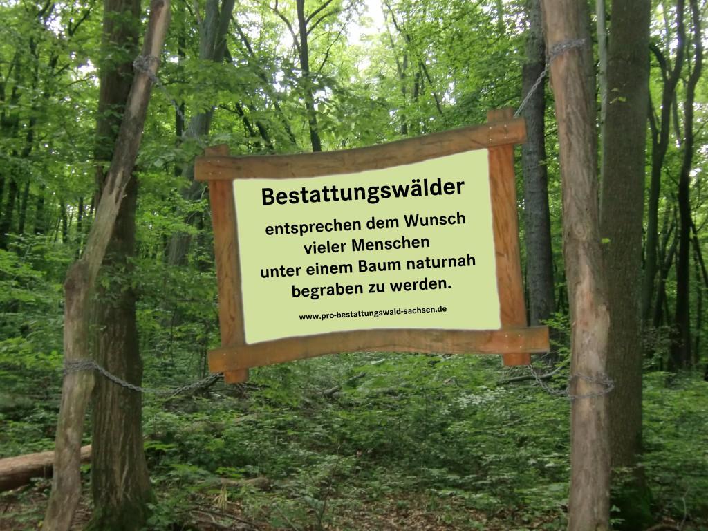 Bestattungswald_1