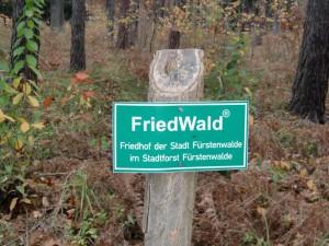 FriedWald_1